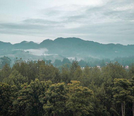 Hutan pinus di bandung utara